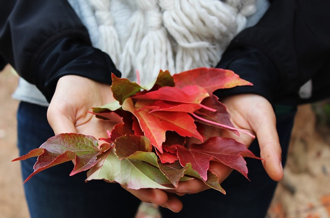 Spending time with your family in the fall is the best! Check out our Fall Bucket List for simple, inexpensive and fun ideas for your family.