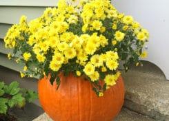 pumpkinvasefeatured