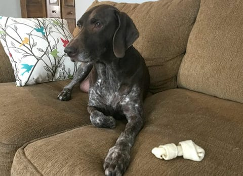 Reward your dog in 5 easy ways!