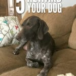 Reward your dog in 5 easy ways!
