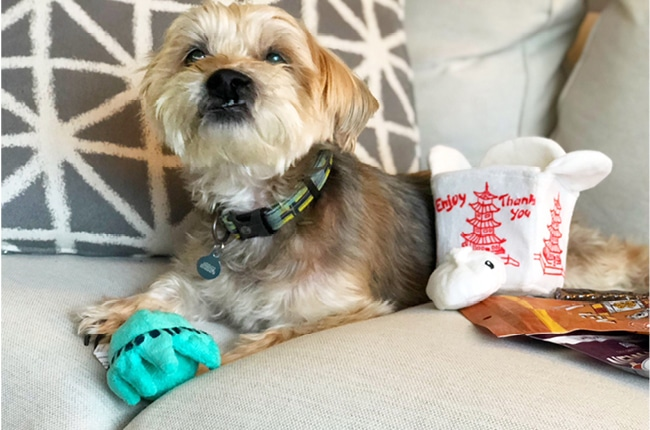 We've teamed up with another great company called Bark Box!Bark Box allows you to spoil your pup without even going outside.