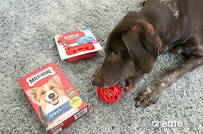 Keep your dog active with fun toys and treats!