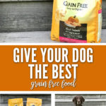 Give Your Dog The Best