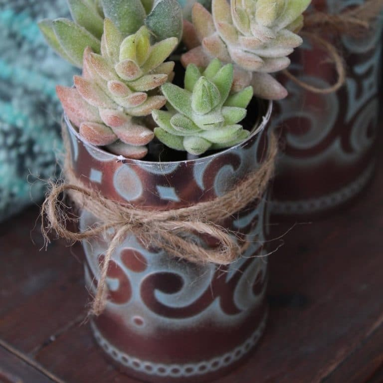 Succulents in copper planters