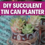 Succulent planter collage
