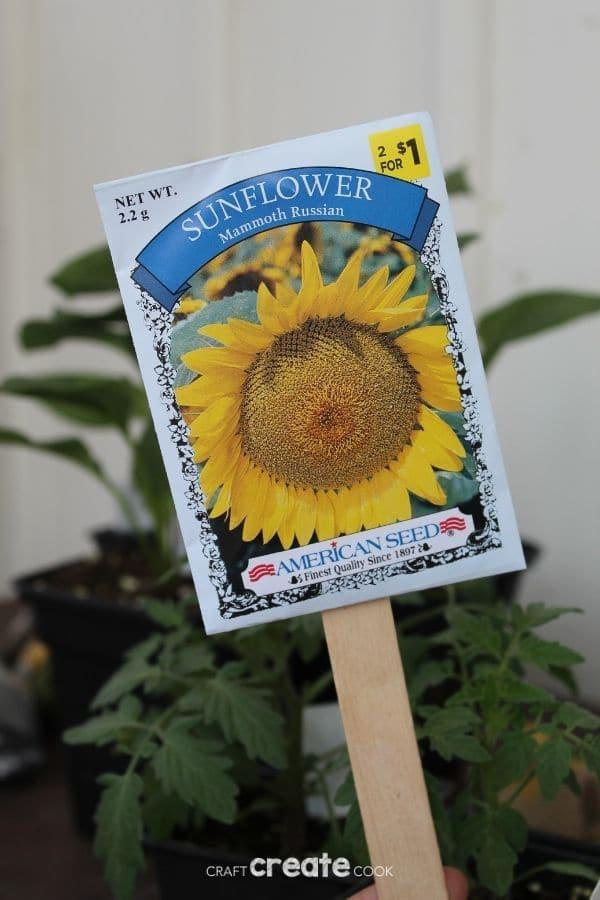 Sunflower seed garden marker